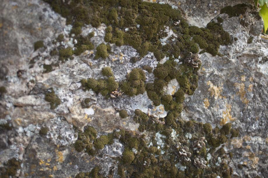 pedra i molsa