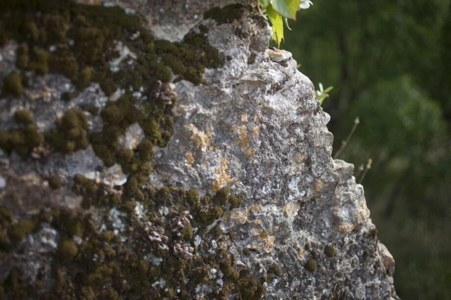 pedras i molsa 2